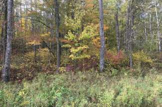 18+ Acres Wooded Land
